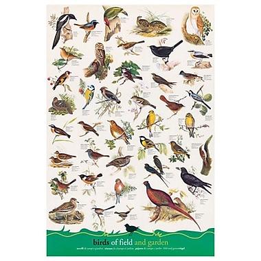 Oiseaux des champs et des jardins, toile, 24 x 36 po