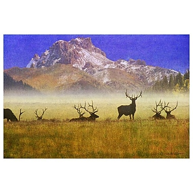 Bull Elk by Vest, Canvas, 24