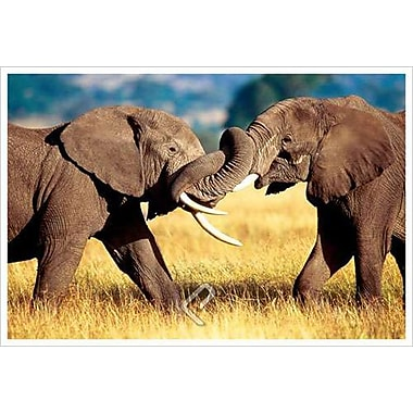 African Elephants Sparring, Stretched Canvas, 24