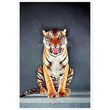 Tiger II, Stretched Canvas, 24