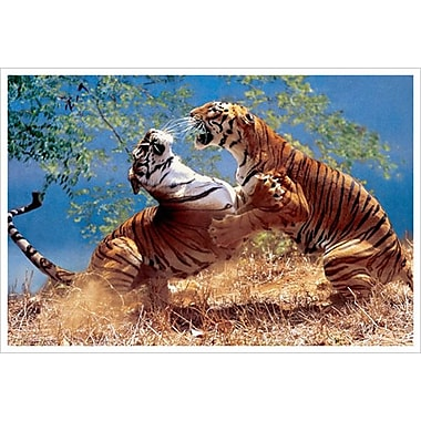 Tigers Fighting, Stretched Canvas, 24