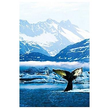 Baleine à bosse, toile étirée, 24 x 36 po