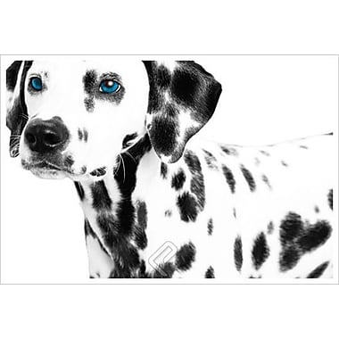 Dalmatian Date 2, Stretched Canvas, 24