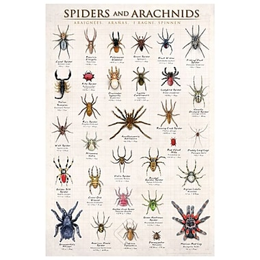 Spiders and Arachnids, Stretched Canvas, 24