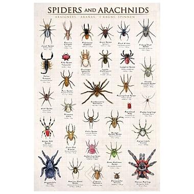 Araignées et arachnides, toile étirée, 24 x 36 po
