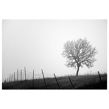 Tree and Fence III by Settle, Canvas, 24