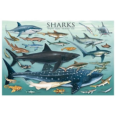 Sharks, Stretched Canvas, 24