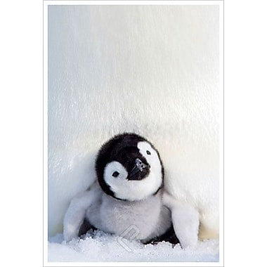 Penguin Chick, Stretched Canvas, 24