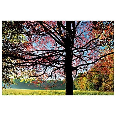 Sassafras Fall 1 de Sellers, toile, 24 x 36 po