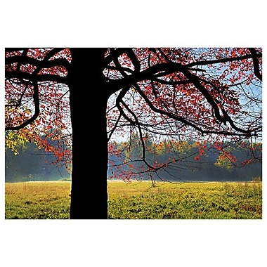 Sassafras Fall 2 de Sellers, toile, 24 x 36 po