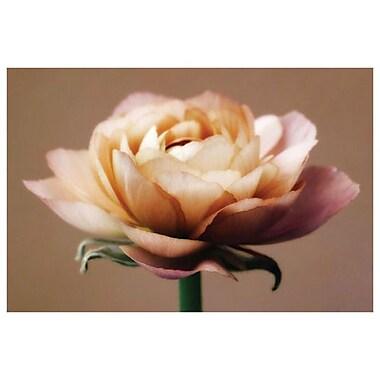 La rose parfaite par Zalewski, toile, 24 x 36 po