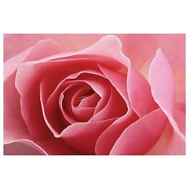 Rose rose 1 par Burk, toile, 24 x 36 po