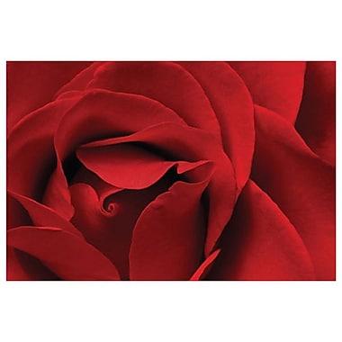 Rose rouge par Burk, toile, 24 x 36 po