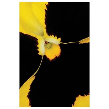 Yellow Pansy de Burk, toile, 24 x 36 po