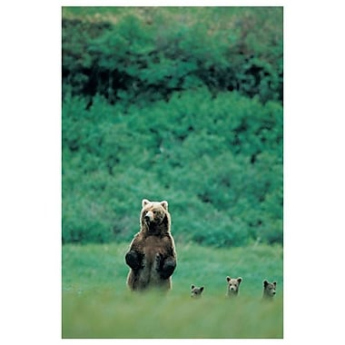 Bears, Stretched Canvas, 24