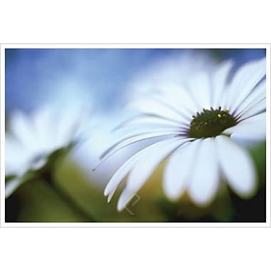Daisy Blue 2 by Connolly, Canvas, 24
