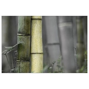 Bambou par Connolly, toile, 24 x 36 po