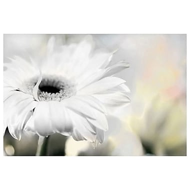 Daisy by Connolly, Canvas, 24