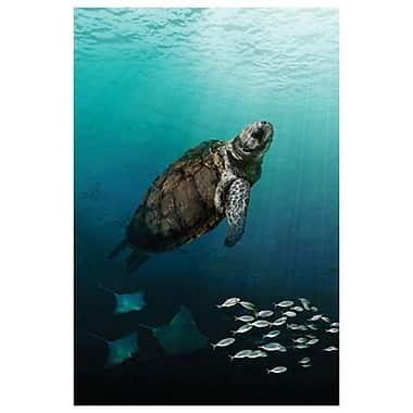 Tortue de mer remontant à la surface de Bradshaw, toile, 24 x 36 po