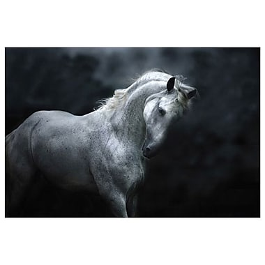 Silver Stallion by Snowhite, Canvas, 24