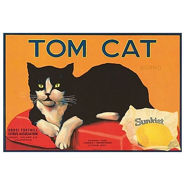 Tom Cat Sunkist, toile tendue, 24 x 36 po