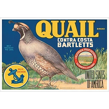 Quail Contra Costa Bartletts, Stretched Canvas, 24