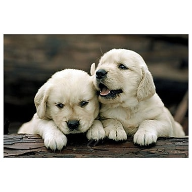 Puppies - Golden Retrievers, Stretched Canvas, 24