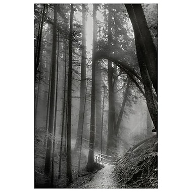Sentier dans les bois de Davis, toile, 24 x 36 po