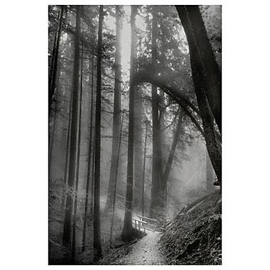 Woodland Path by Davis, Canvas, 24