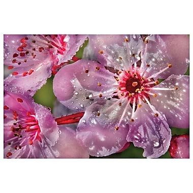 Cherry by Davis,, Canvas, 24