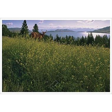 Le cerf au lac de Hunziker, toile de 24 x 36