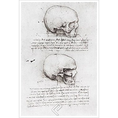 Lateral View Skull by da Vinci, Canvas, 24