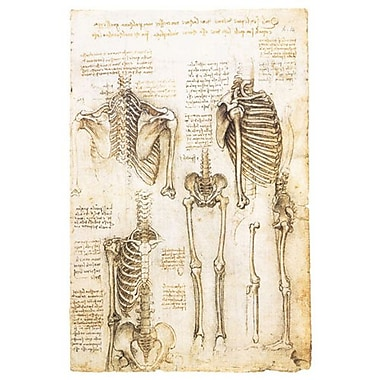 Skeleton Studies by Da Vinci, Canvas, 24