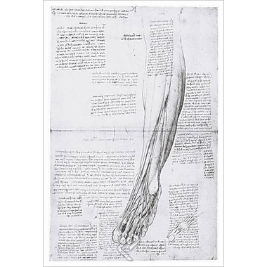 Muscles antérieurs de la jambe de da Vinci, toile, 24 x 36 po