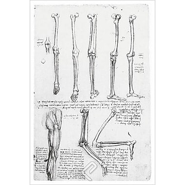 Bones Muscles Thigh by da Vinci, Canvas, 24
