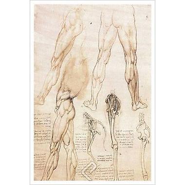 Anatomie de la jambe de da Vinci, toile, 24 x 36 po