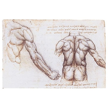 Muscles Back Upper Arm by da Vinci, Canvas, 24