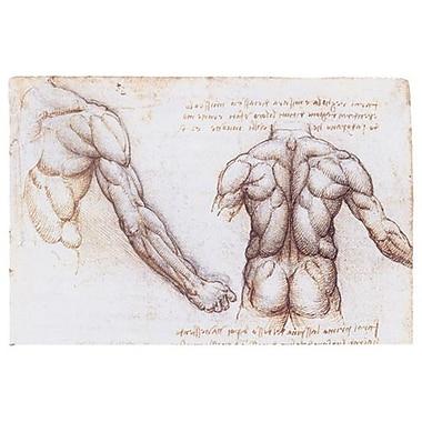 Muscles du dos et du bras de da Vinci, toile, 24 x 36 po