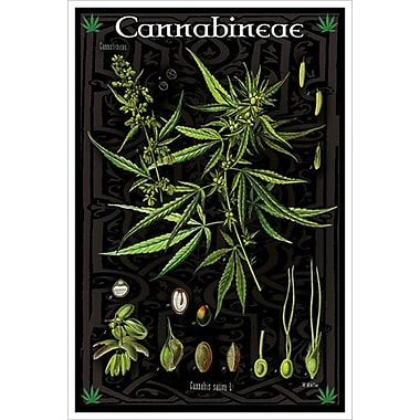 Cannabineae I, Stretched Canvas, 24