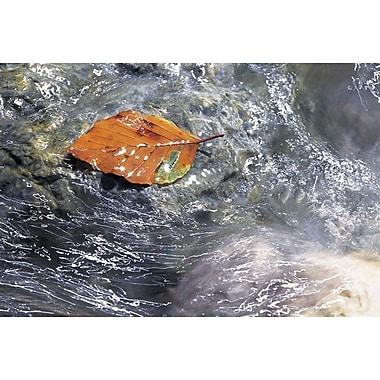 Feuille d'automne à la dérive, toile étirée, 24 x 36 po
