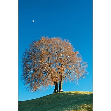 Tree Silhouette, Stretched Canvas, 24