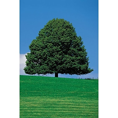 Wide Tree Silhouette, Stretched Canvas, 24