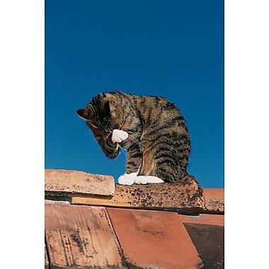 Chat sur un toit, toile, 24 x 36 po