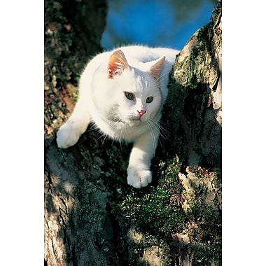 White Cat On A Tree, Stretched Canvas, 24