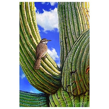 Cactus Wren by Vest, Canvas, 24