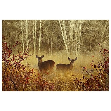 Foggy Deer by Vest, Canvas, 24