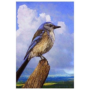 Geai buissonnier de Vest, toile, 24 x 36 po