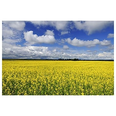 Canola in La Doree by Grandmaison, Canvas, 24