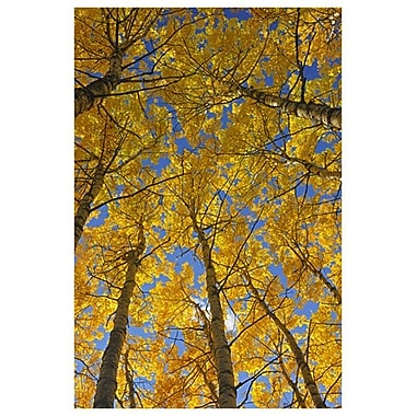 Trembling Aspens by Grandmaison I, Canvas, 24