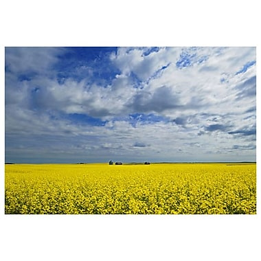 Canola Graineries by Grandmaison, Canvas, 24